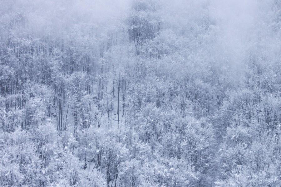 köd, hópehely, felhős, havas, erdő, téli