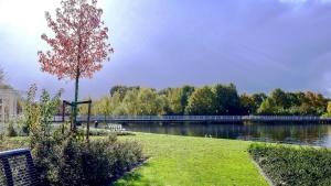 vrt, trava, park, sunce, Rijeka