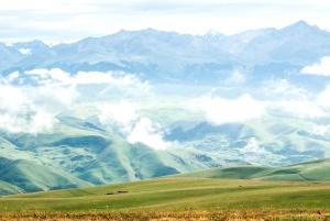 green, mountain, meadow, field, summer