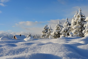 landscape, snow, conifer