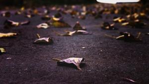 daun, road, musim gugur