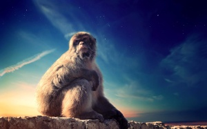 magical, monkey, sky, primate, baboon