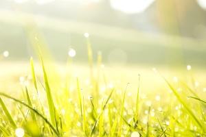 Morgen, Tau, Gras, Wiese, Pflanze, Himmel, Sonne, Landschaft, Sommer