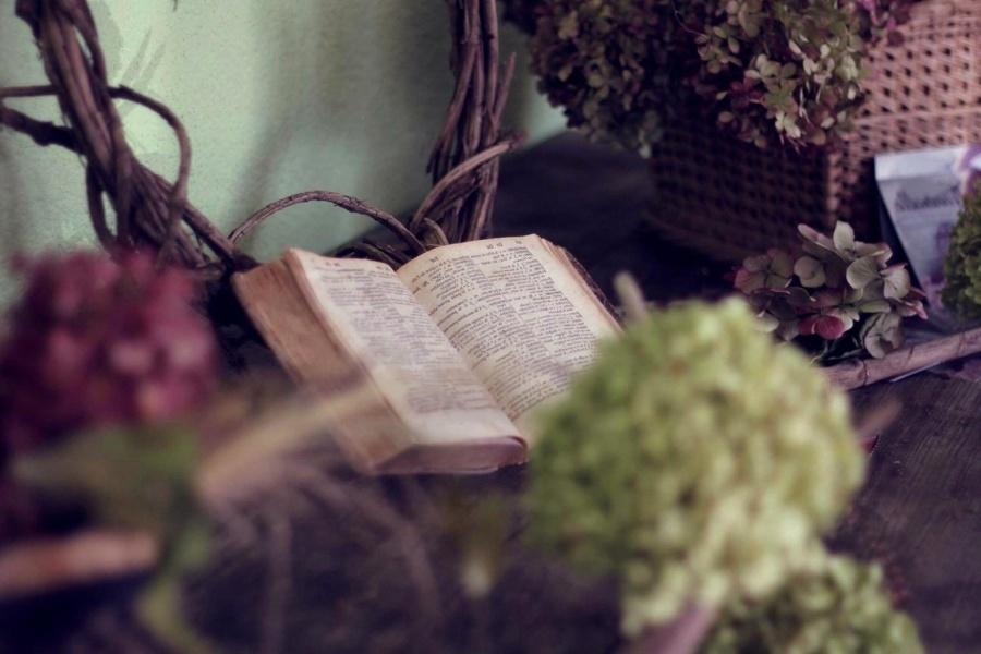old, book, still life, flower