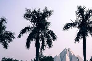 palm tree, sky, park