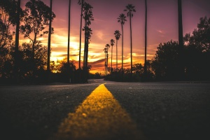 palm tree, dusk, sky, landscape, road, sunset, sky