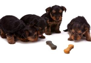 šteňa, pes, pet, zviera, kosti, potraviny