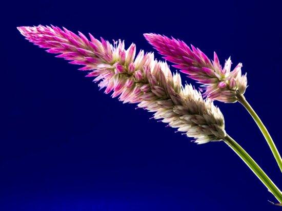 завод, дизайн, квітка, колір, візерунок