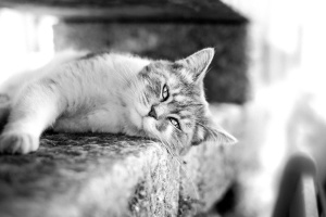 cat, black, white, cat, feline, animal, kitten, fur, pet, domestic, kitty