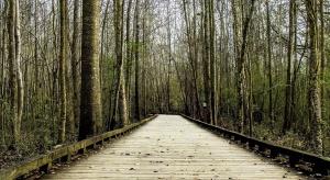Road, træ, road, landskab, skov