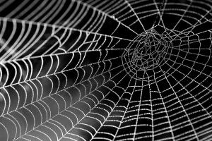 spider, web, texture, dew