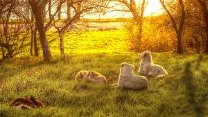 Coucher de soleil, chien, herbe