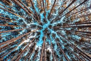 høje træ, sky, skov, natur