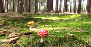 wood, agaric, fungus, organism, mushroom