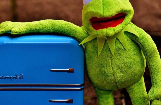 toy, frog, blue, fridge
