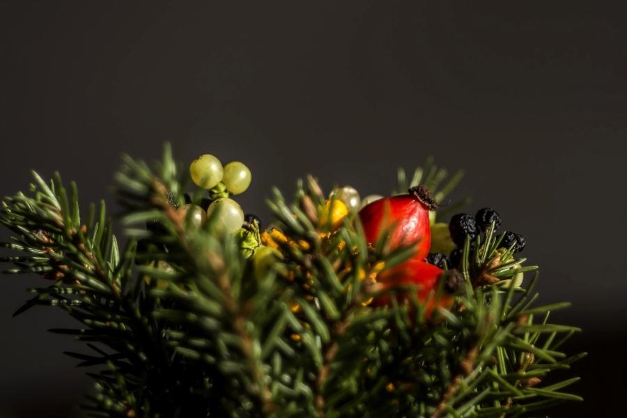 Árbol, brach, flor, planta
