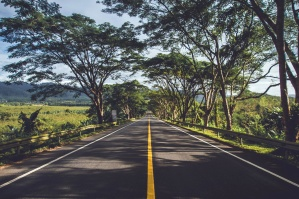 tree, lined, road, road, way, highway, asphalt