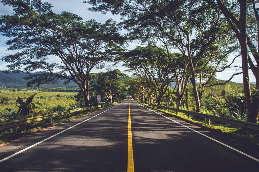 Baum, gezeichnet, Straße, Straße, Weg, Autobahn, Asphalt