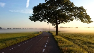 tree, summer, road, nature, blue sky, road, way, landscape