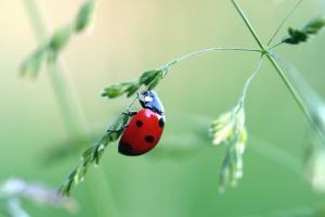 ladybug, leaf, plant, insect, animal