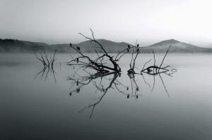 lake, branch, mountain, water, fog