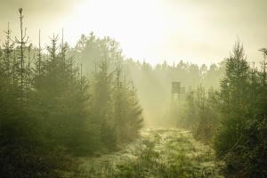 fog, cabin, wood, forest, mountain, road, fir
