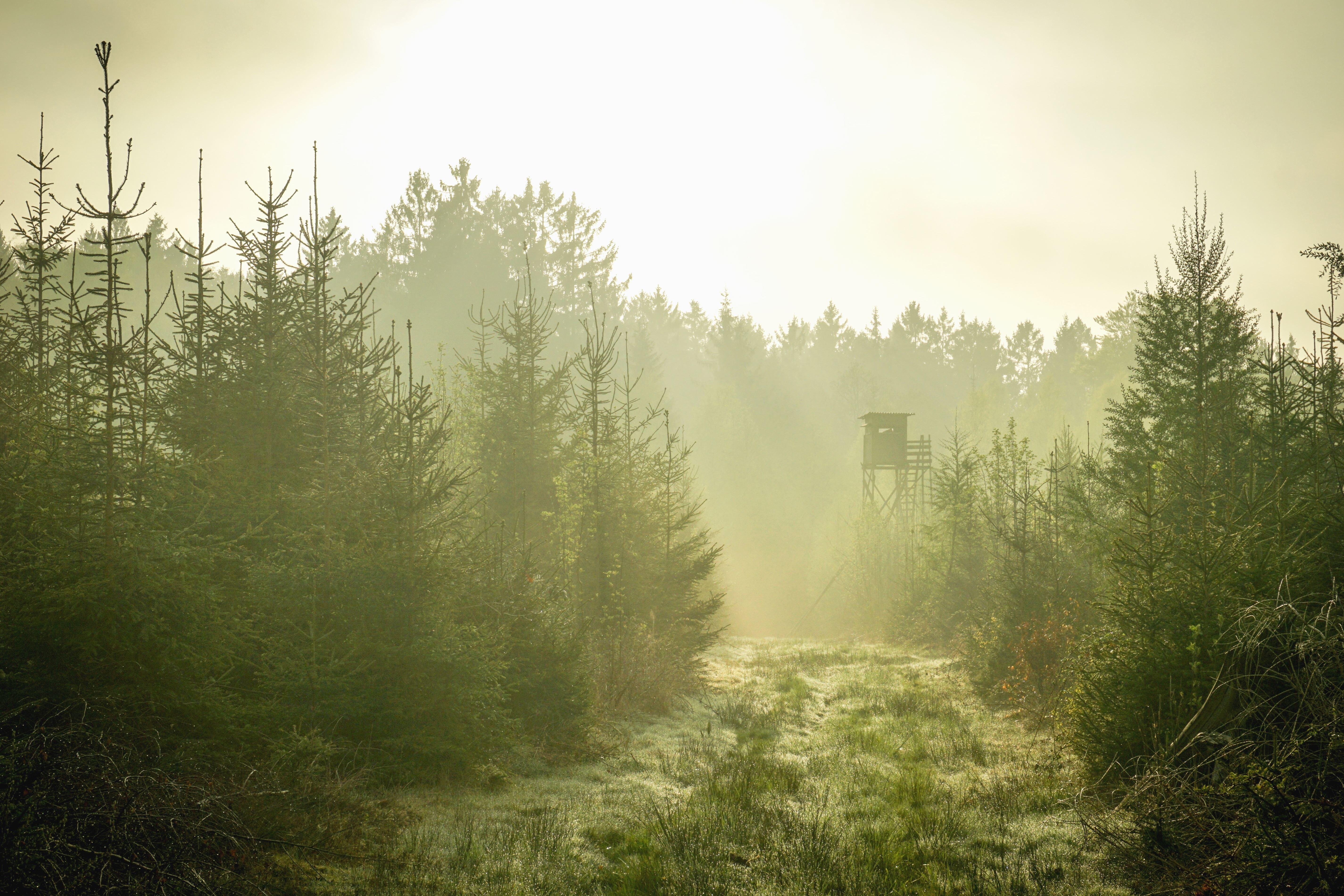 Free Picture Fog Cabin Wood Forest Mountain Road Fir