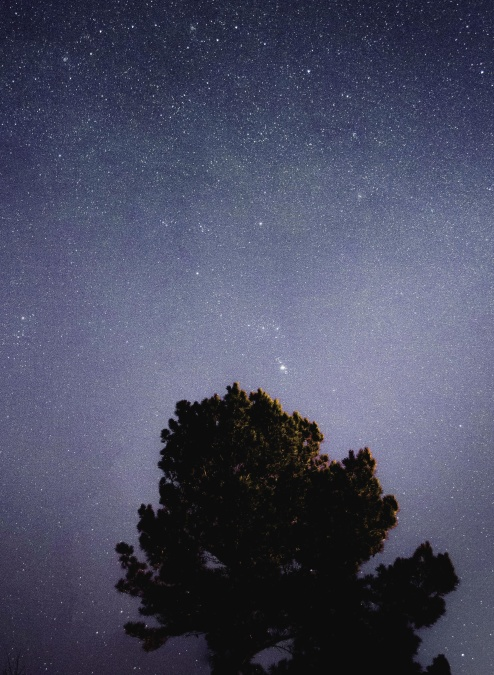 drvo, zvijezde, svemir, noć, vrhu drveta