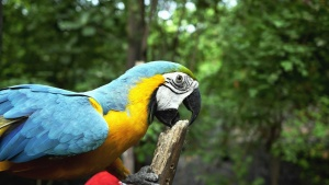 macaw parrot, beak, wood, feather, colorful, color