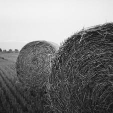 sláma, zemědělství, zemědělství, obilí, pole