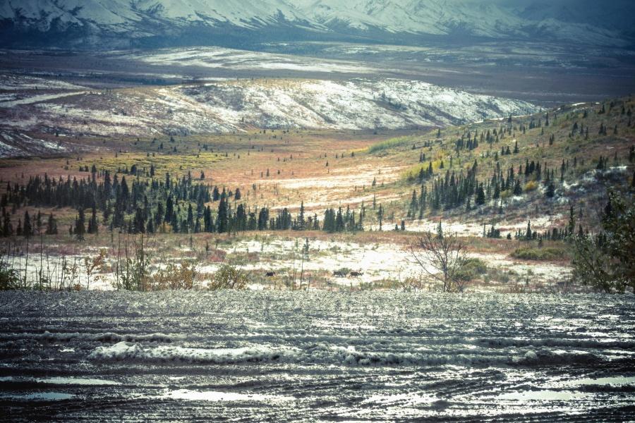 Gunung salju, konifer, cemara, dingin, musim dingin, valley