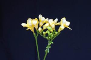 flower, stem, petal, yellow flower, bud, plant