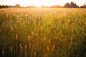 grass, meadow, wood, nature, sun