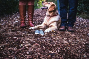 dog, boots, shoes, man, woman, leaf, pet