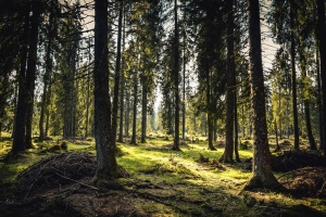 forest, wood, grass, nature, tree, mountain