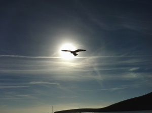 bird, sun, sky, mountain, animal, sky