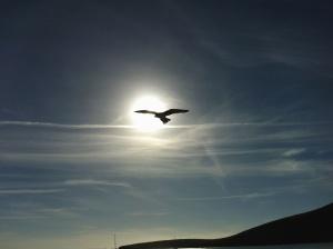 Uccello, sole, cielo, montagna, animale, cielo