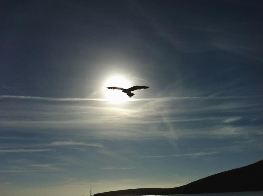 Oiseau, soleil, ciel, montagne, animal, ciel
