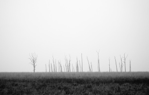 tree, fog, snow, fog, field, cold