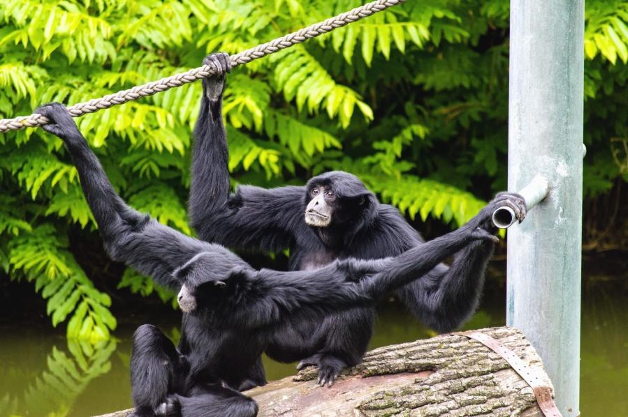 macaco, corda, pilar, planta, animal, Rio, água