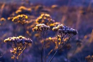 Flor, planta, tallos, prado, verano