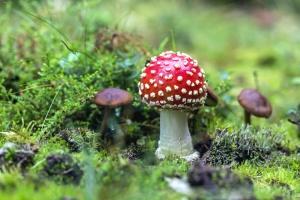 mushroom, grass, moss, nature, plant