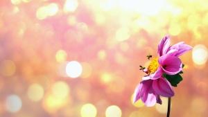 꽃, 태양, 꽃, 꽃잎, 꿀벌, 수 분, 꽃가루