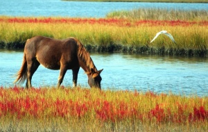 horse, meadow, river, water, bird, animal, flower