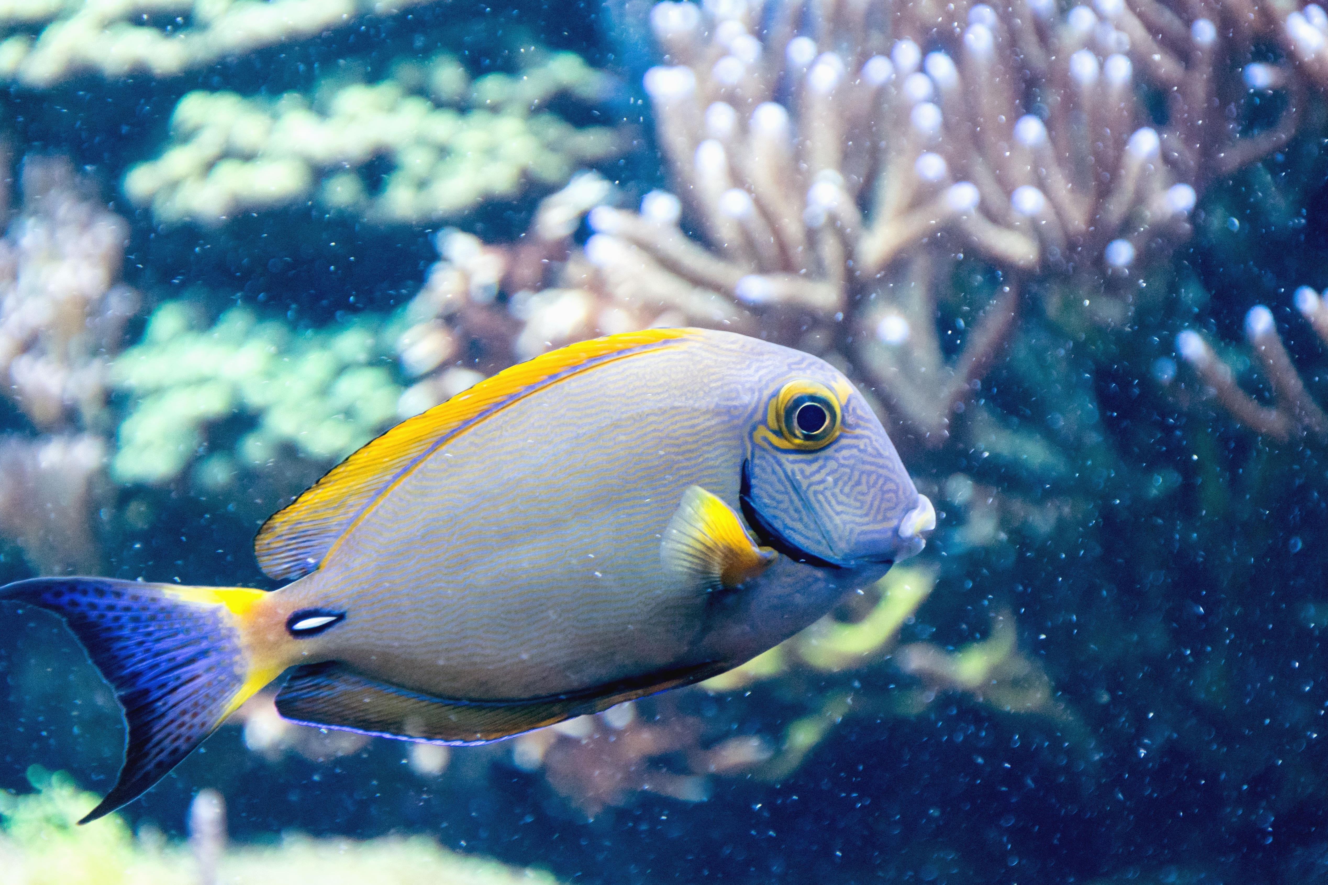 показать картинки рыб явление спазмов