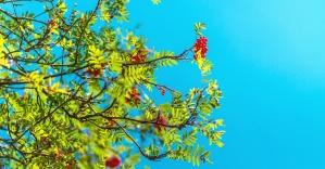 stablo, cvijet, list, nebo, grana