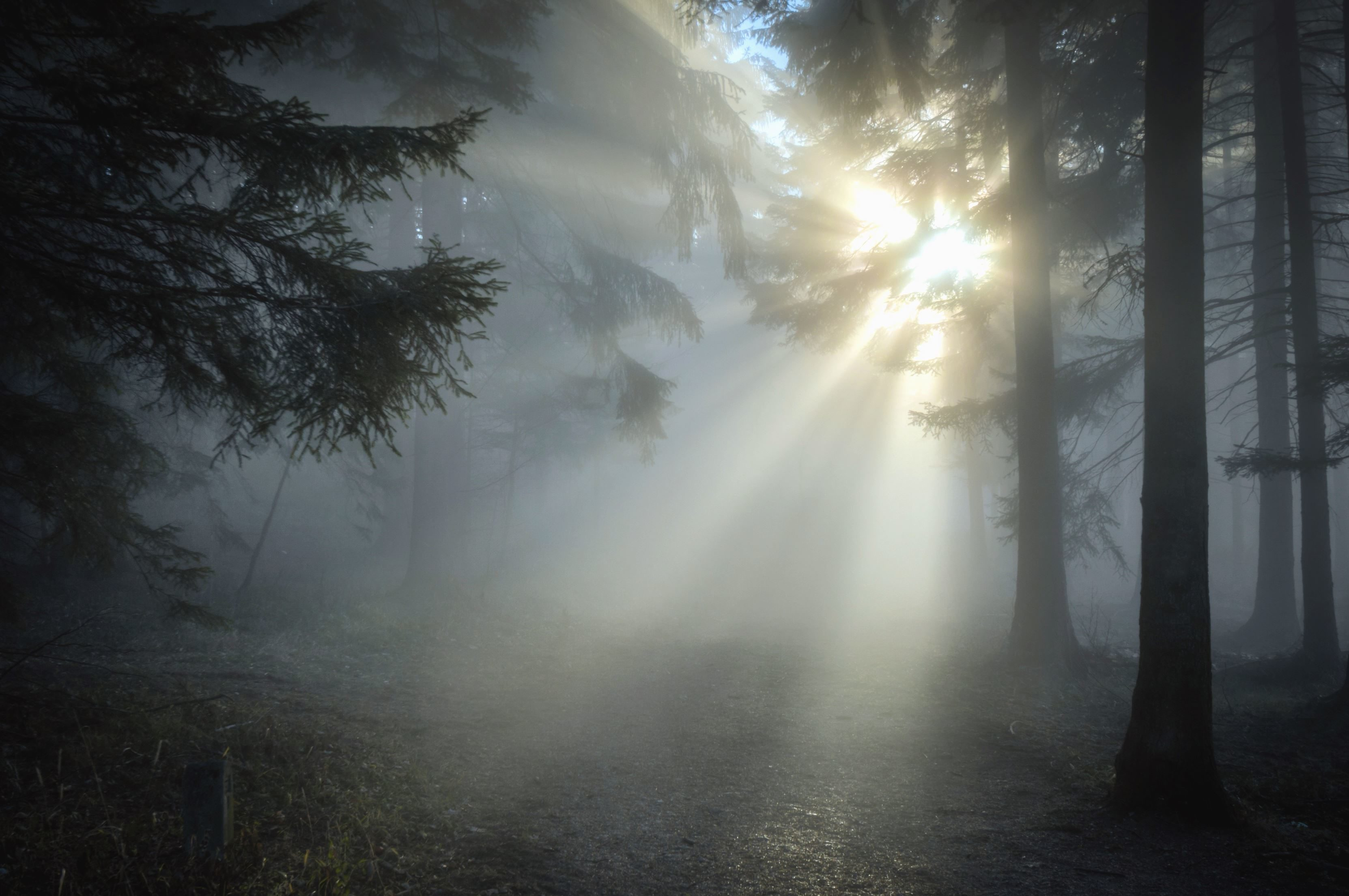Free Picture Forest Wood Tree Sun Light Sky Light
