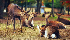 deer, grass, animals, wildlife, wood, park
