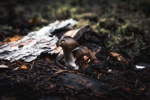 mushroom, forest, plant, nature, moss, grass