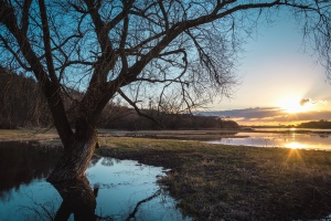 sun, reflection, wood, nature, water, grass